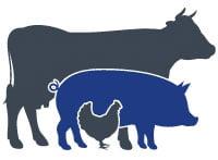 Une assurance agricole - Fermes d'élevage